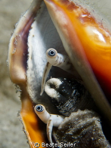"Conch eyes , taken under the ""Blue Heron Bridge"" by Beate Seiler"